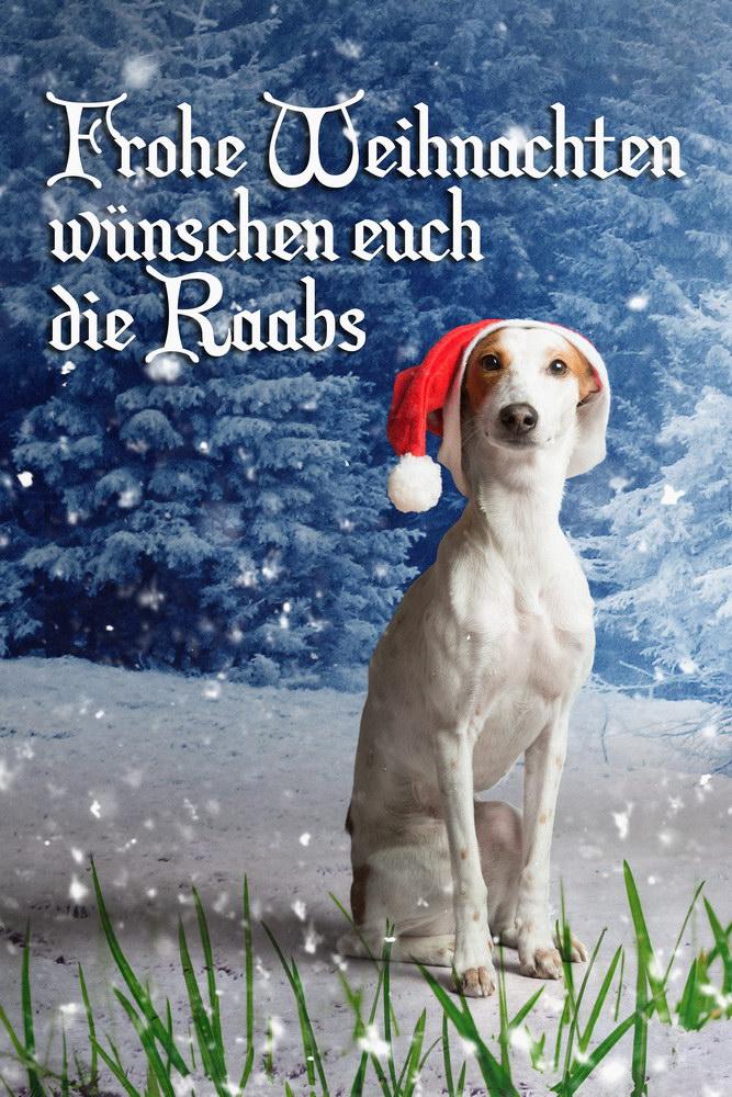 Frohe Weihnachten, Conchi, Hund, Dog, Podenco, Weihnachtsmütze, Raab